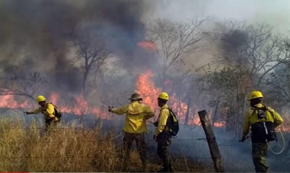 Photo of En el Amazonas solo se escuchan las llamas | Claman por su vida