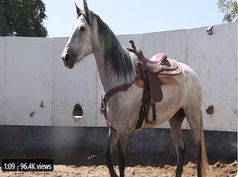 caballos de la policía