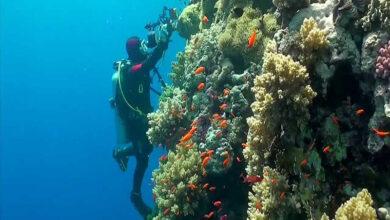 Photo of Cómo bucear bajo el agua